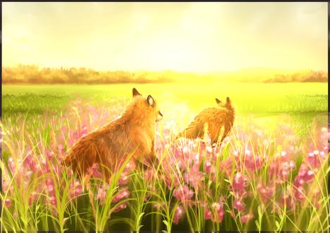 Обои Две лисички на поляне цветов, by RayCrystal