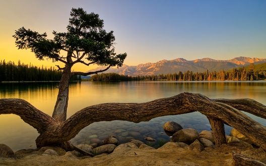 Обои Дерево на каменистом берегу реки