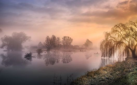 Обои Ранее утро, плакучая ива на берегу туманной реки