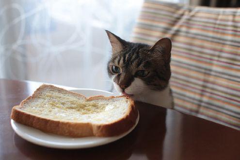 Обои Кот смотрит на тарелку с хлебом