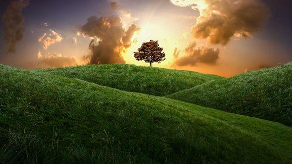 Обои Одинокое дерево в конце зеленых холмов на фоне облачного неба, фотограф geken
