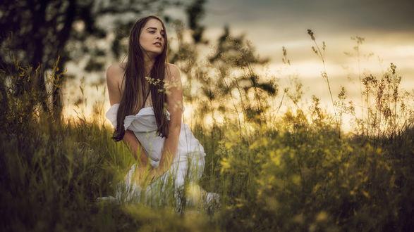 Обои Девушка сидит в траве с цветами