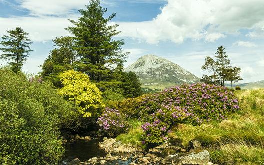 Обои Небольшой ручеек, текущий по каменному ложу среди холмистых берегов, буйно поросших растительностью, на фоне неба, затянутого белыми тучами и горной вершины