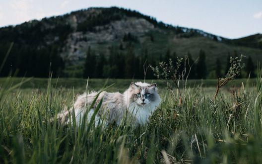 Пушистый кот стоит в траве на фоне горы