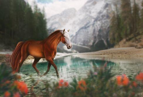 Обои Лошадь идет по голубой воде, by Fiirewolf