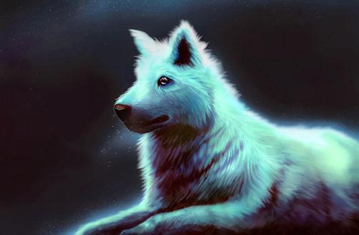 Обои Белый волк на темном фоне, by Skysurie