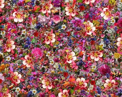 Обои Цветочный красочный фон