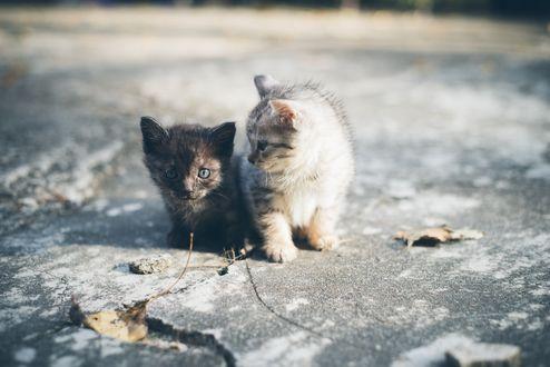 Обои Два милых котенка на асфальте