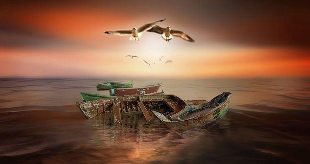 Обои Чайки над старыми лодками на воде, фотограф Nasser Osman
