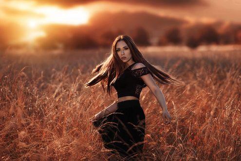 Обои Девушка в поле на фоне заката, фотограф Alessandro Di Cicco