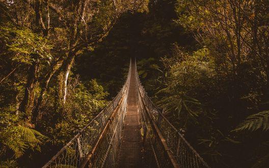Обои Висячий пешеходный мост, теряющийся в густых зарослях