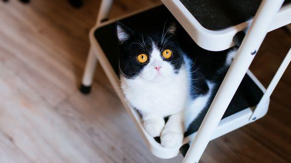 Обои Кошка сидит на этажерки