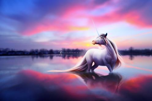 Обои Белый единорог стоит в воде на фоне красивого заката, by Alimarije