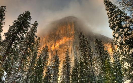 Обои Заснеженный лес у скалы, парк Йосемити, США