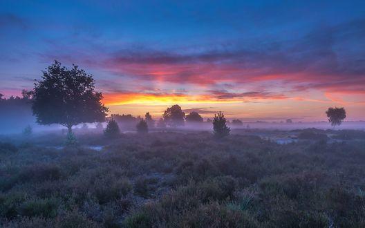 Обои Поляна и редкие деревья окутаны утренним туманом