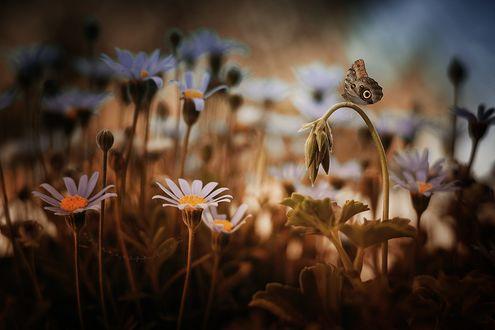 Обои Бабочке сидит на цветке, фотограф Fred Just