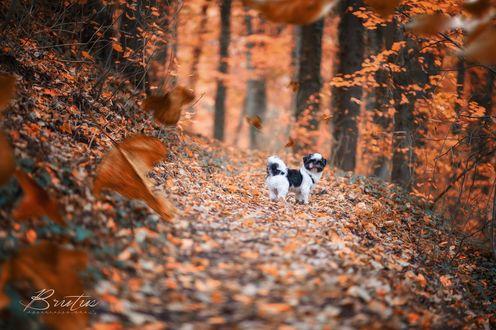 Обои Собака стоит на осенней дорожке, фотограф Fred Just