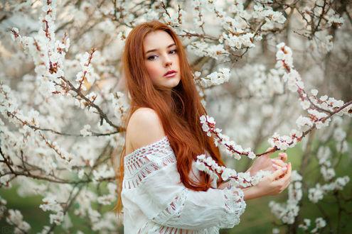 Обои Милая девушка Александра стоит у весеннего дерева, фотограф Ольга Бойко