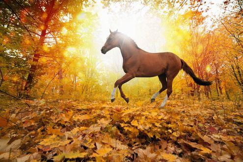 Обои Конь на поляне с осенними листьями