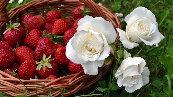 Обои Корзина с ягодами клубники и белые розы