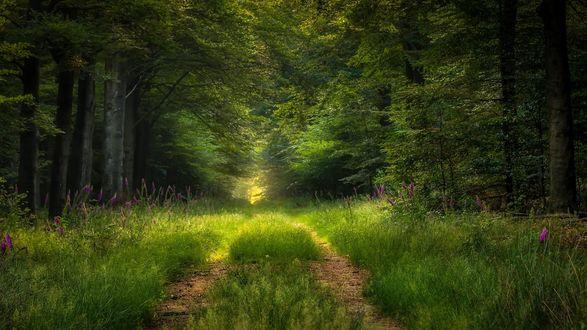 Обои Дорожка в зеленом лесу