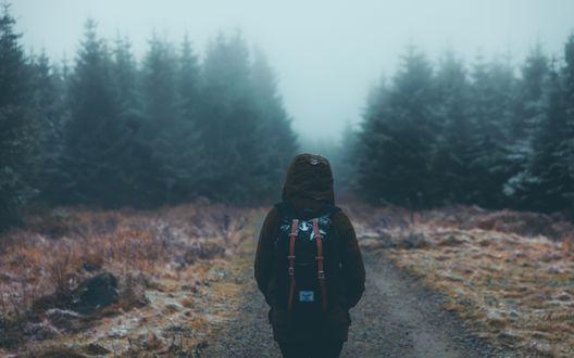 Обои Турист с рюкзаком идет по дороге к лесу, вокруг сгущается туман