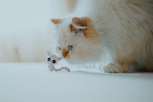 Обои Котик с игрушкой