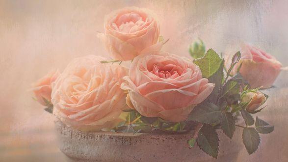 Обои Нежные розы в горшке