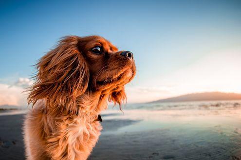 Обои Собака на фоне неба, фотограф Andrew Branch