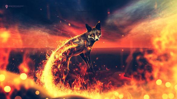 Обои Лиса в огне