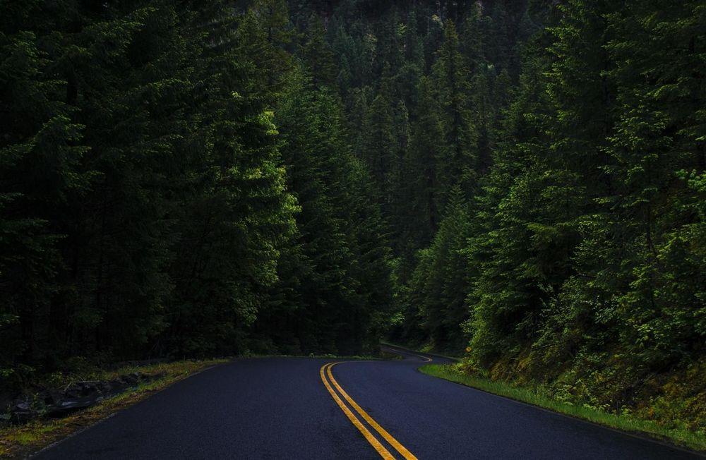 Обои для рабочего стола Дорога в лесу, фотограф Pallav Vyas