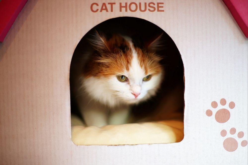 Обои для рабочего стола Бело-рыжий кот в домике (cat house / кошачий дом)
