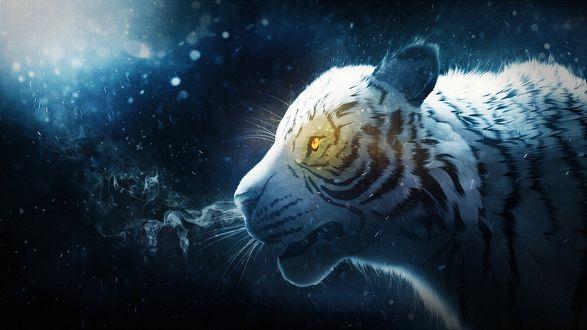 Обои Тигр под падающим снегом