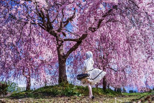 Обои Девочка-кукла со скрипкой в футляре стоит перед цветущим весенним деревом вишни, by AZURE