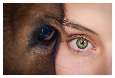 Обои Глаза девушки и лошади рядом, фотограф Brigitte Foysi