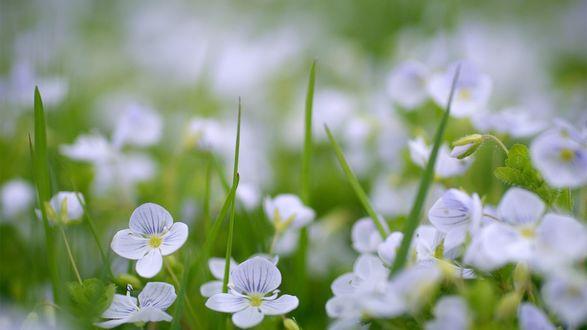 Обои Цветы в траве крупным планом