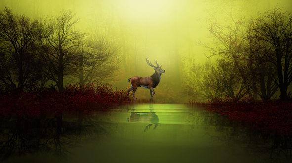 Обои Олень стоит в лесу у реки, фотограф Nasser Osman