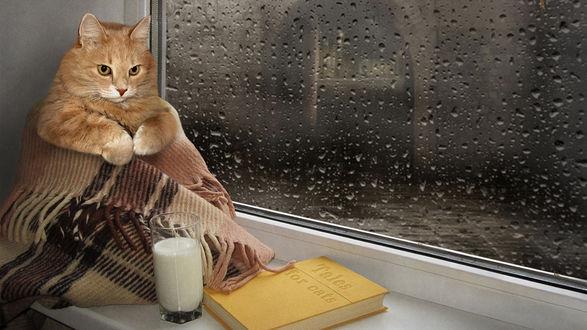 Обои Грустный кот, завернутый в теплый плед, сидит на подоконнике, рядом стоит стакан с молоком и книга (Tales for cats / Сказки для кошек), а за окном уже надоевшее всем дождливое лето