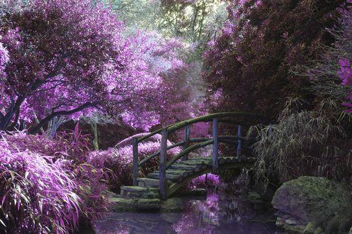 Обои Деревянный мостик в саду, фотограф Cosmic Timetraveler