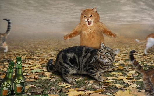 Обои Рыжий кот испуганно поднялся на задние лапы, остальные кошки испуганно разбегаются, на переднем плане бутылки с пивом, (beer / пиво)