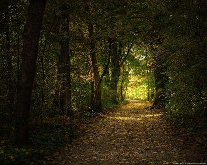 Обои Тенистая парковая аллея, желтые листья на земле