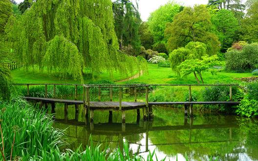 Обои Густые зеленые деревья склонили свои ветки над небольшим прудом и старым мостиком в парке