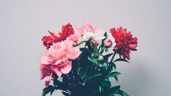 Обои Букет цветов на белом фоне