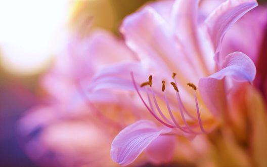 Обои Лепестки цветка на размытом фоне