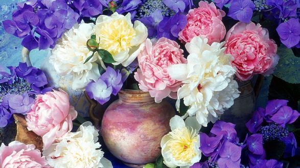 Обои Роскошный букет из сиреневой гортензии, белых и розовых пионов в глиняной вазе