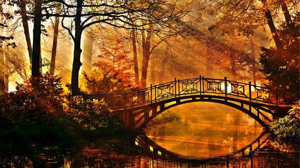 Обои Мост через речку в осеннем парке в лучах солнца