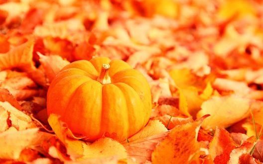 Обои Рыжая тыковка на осенней листве