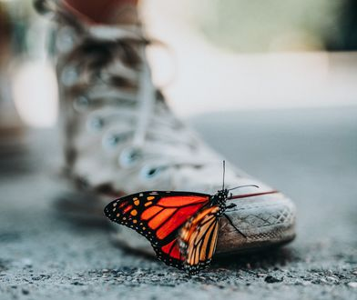 Обои Яркая бабочка сидит на кеде