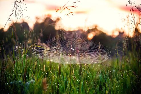 Обои Паук сплел паутину в траве, приготовившись к охоте. Фотограф Сагайдак Павел