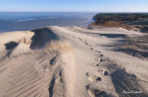 Обои Следы на песчаных дюнах. Фотограф Daiva Cirtautе